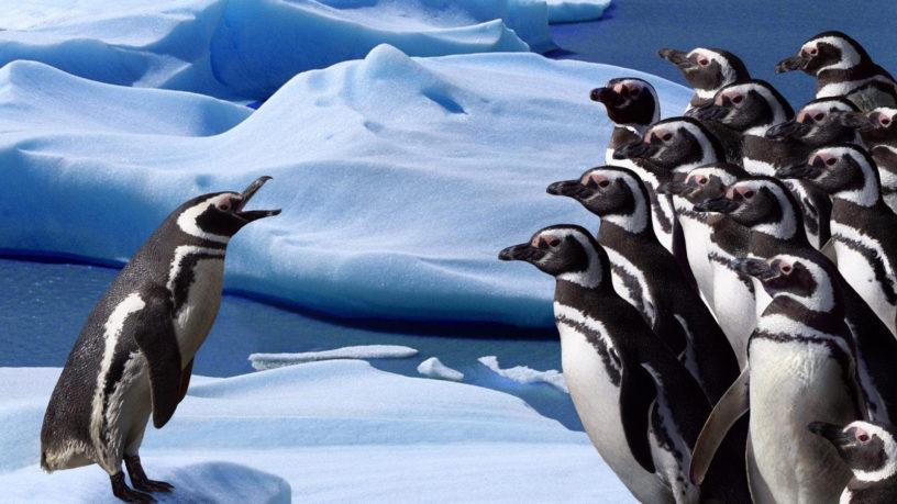 talking penguins